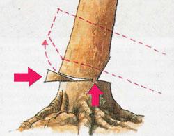 как спилить дерево