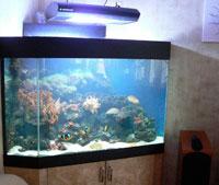 аквариум_в_интерьере